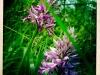 jura-fleur-IMG_2368