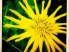jura-fleur-IMG_2370