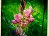 jura-fleur-IMG_2377