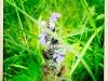 jura-fleur-IMG_2390
