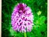 jura-fleur-IMG_2559