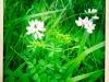 jura-fleur-IMG_2649