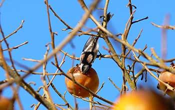 oiseaux jura