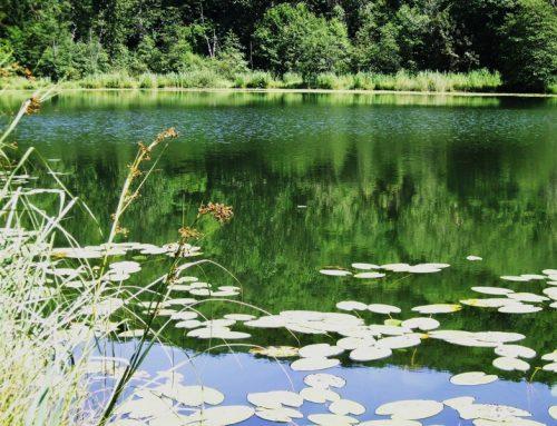 Lac de Viremont